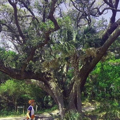 Charleston - Oak Tree | Cycle of Life Adventures