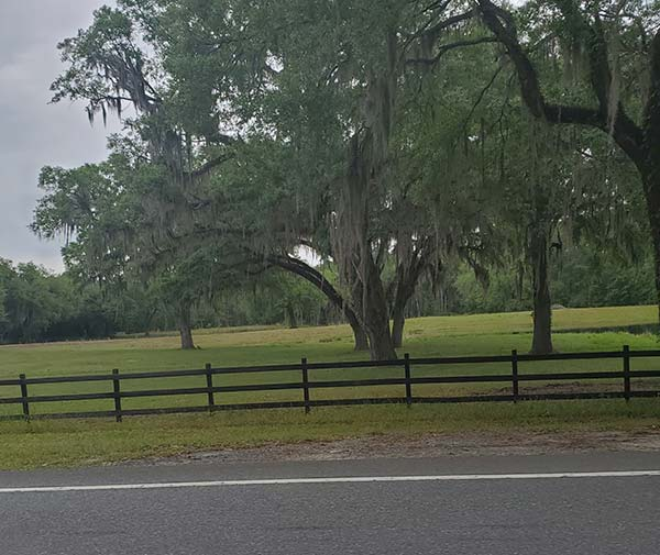 COLA | Day 41 - Midway to Madison FL | Image 4
