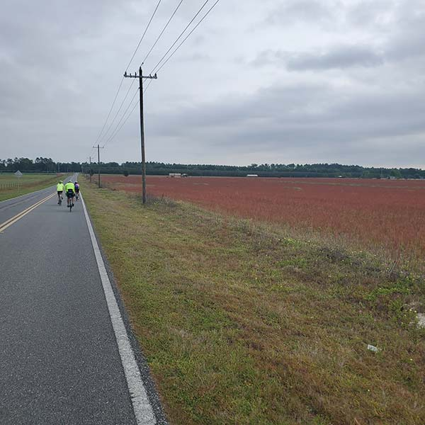 COLA | Day 42 - Madison to High Springs FL | Image 3