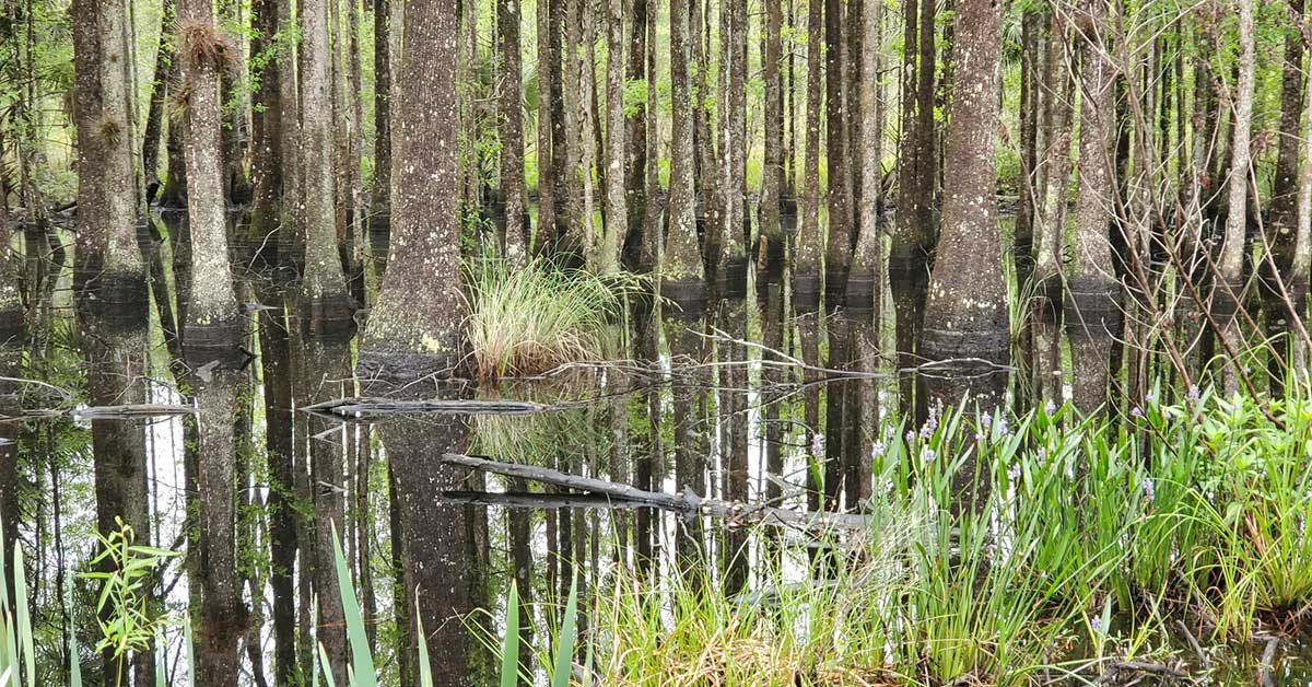 COLA | Day 43 - High Springs to E Palatka FL | Image 10